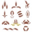 Grain ears. - Stock Vector