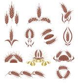 Grain ears. — Stock Vector