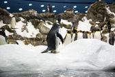 Pinguino con i suoi amici nel giardino zoologico — Foto Stock