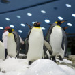 图库照片: Penguins friends in zoo closeup