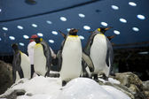 Penguins friends in zoo closeup — Stock Photo