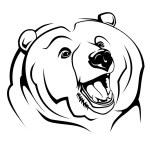Wild bear — Stock Vector