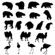 Set of bears, ape, penguins, camels and flamingos  silhouettes. — Stock Vector