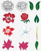 Květinová sada — Stock vektor