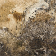 Grunge Mouldy Wall - Stock Photo