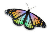 Colored Monarch Butterfly — Stock Photo