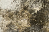 Grunge Mouldy Wall — Stock Photo