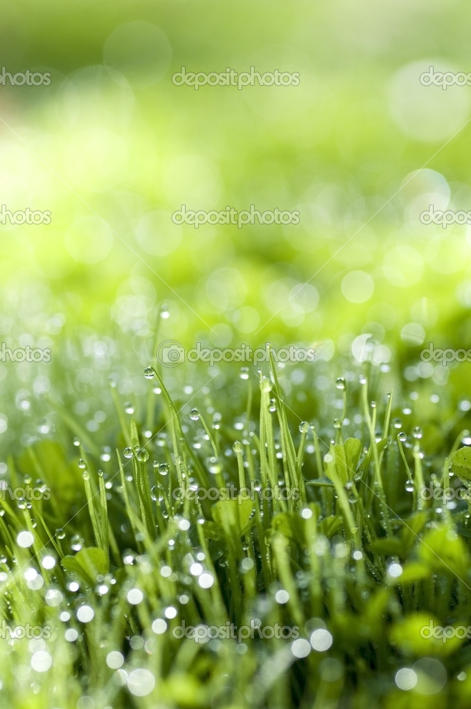 Green grass with morning dew — Stock Photo #4058452