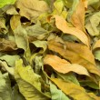 Foliage — Stock Photo #4017636