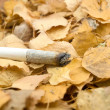Cigaret on foliage — Stock Photo