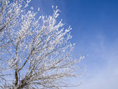 Branches of a tree in the winter — Stock Photo