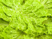 It is a lot of salad leaves — Stock Photo
