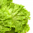 Stock Photo: Semicircle from salad leaves