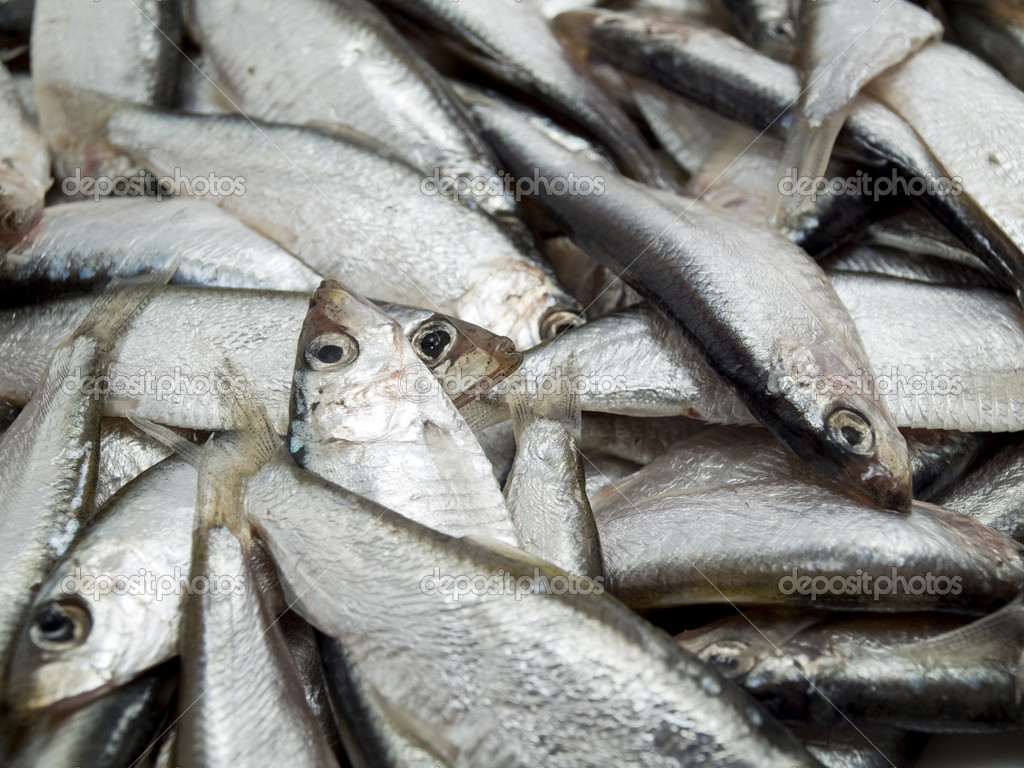 It Is A Lot Of Fish Stock Photo Andron19821982 4994366