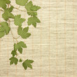 Dried green leaves over fabric textile — Stock Photo #4086368