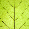 Green leaf — Stock Photo #4333674