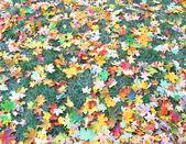 Podzimní zahradní — Stock fotografie