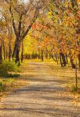 Podzimní cesta — Stock fotografie
