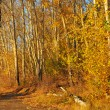Pathway in autumn forest — Stockfoto #4005560