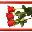 Stock Photo: Red fresh roses