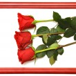 Red fresh roses — Stock Photo #4172647