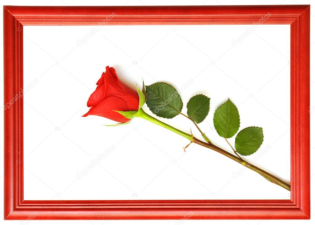 Red fresh rose in wood frames. space for your text  Stock Photo #4172656