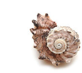 Sea shell on white background — Stock Photo