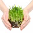 Women hands protect sprouts green grass — Stock Photo #4926950