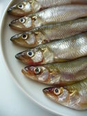 Smelts — Stock Photo