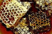 Honey, honeycomb — Stock Photo