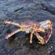 Stock Photo: Crab .