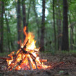 Bonfire in the forest. — Stock Photo #4059277
