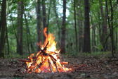 Bonfire in the forest. — 图库照片
