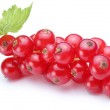Bunch of red currants on a white background — Stock Photo