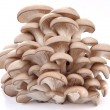 Oyster mushrooms on a white background — Stok fotoğraf