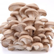 Oyster mushrooms on a white background — Stock fotografie
