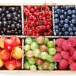Clourful berries - Stock Photo