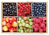 Clourful berries — Stock Photo