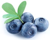 Four blueberries on a white background. — Stock Photo