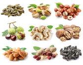 Colección de diferentes variedades de frutos secos — Foto de Stock