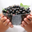Crockery with black currant. - Stock Photo