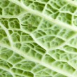 Image texture cabbage leaf — Stock Photo