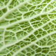 Royalty-Free Stock Photo: Image texture cabbage leaf