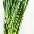 Stock Photo: Green onions bunch on a white background
