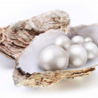 Image placer pearls in a shell on a white background. — Stock Photo