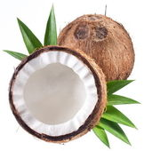 High-quality photos of coconuts on a white background. — Stock Photo