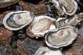 Fresh oysters are laid out on the ice. — Stock Photo