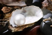 Image of a white pearl in the shell on wet pebbles. — Stock Photo
