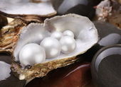 Image placer pearls in a shell on the wet pebbles. — Stock Photo