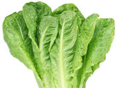 Image of lettuce on white background. The file contains a path — Stock Photo